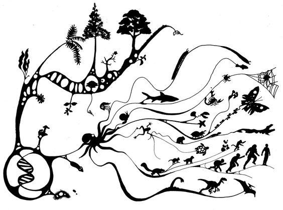 evolutionweb