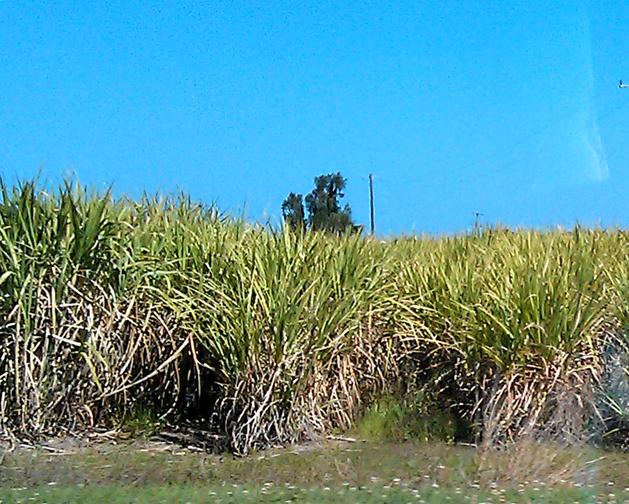 Sugar cane plantation in Queensland - the scale of these operations is amazing