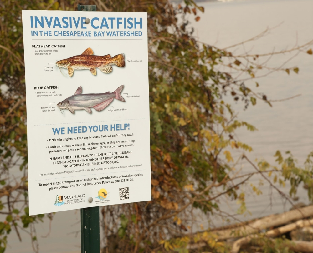 Signs such as this inform the public about invasive catfish and the need to minimize their spread.