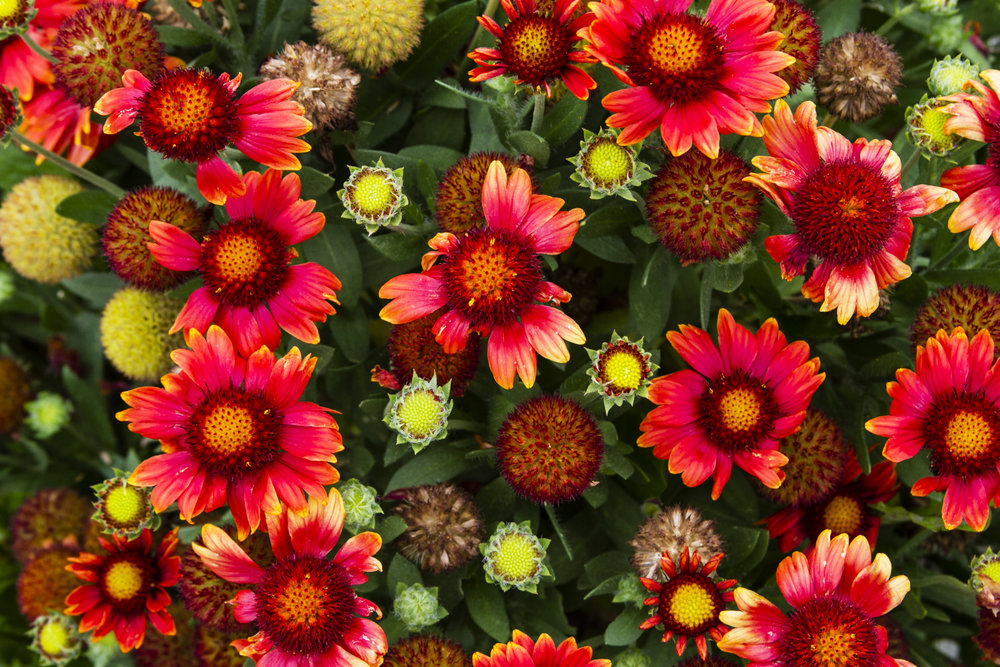 buddahgardens11.jpg