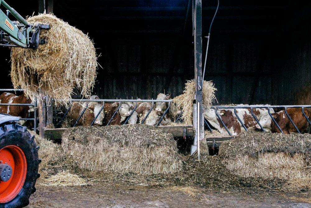 Farmer_HM_08.jpg