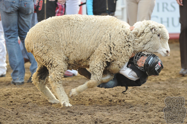 Mutton Busting - 2011 Clovis Rodeo