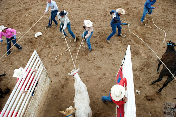 Calf Scramble - Mother Lode Round-Up