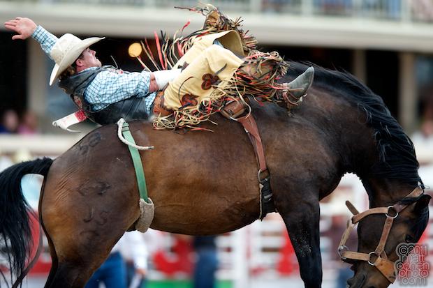 Joe Gunderson - 2011 Calgary Stampede