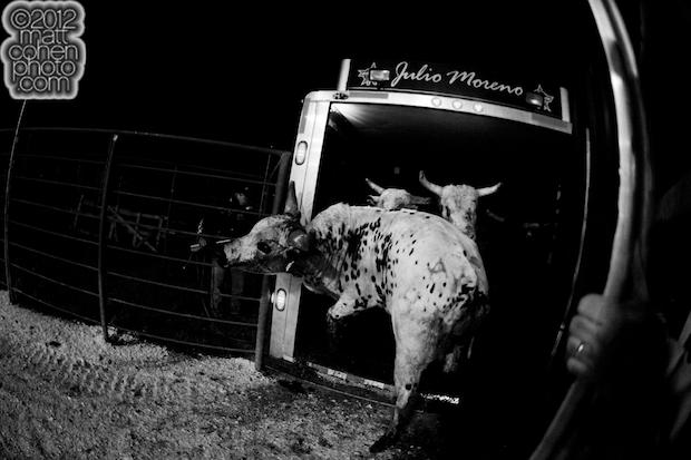 Julio Moreno's bulls
