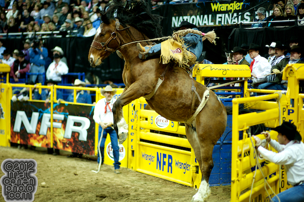 2012 National Finals Rodeo- Saddle Bronc Stock - Miss Congeniality of Powder River Rodeo