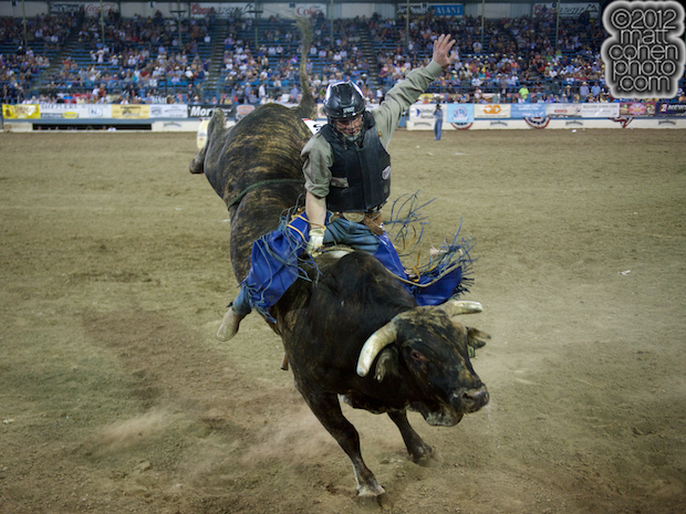 2012 National Finals Rodeo- Bull Riding Stock - Glory Days of Growney Brothers Rodeo Co