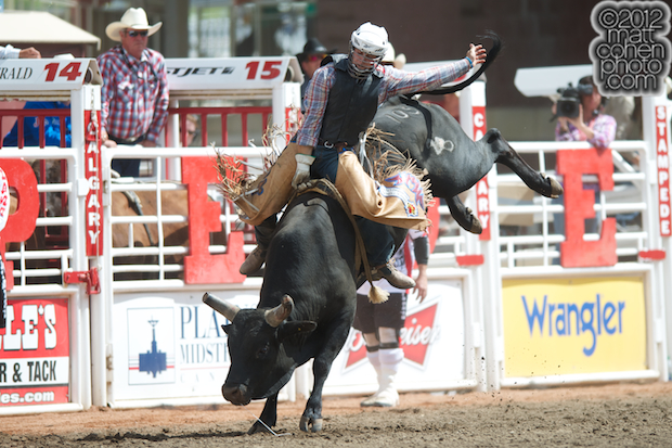 2012 National Finals Rodeo- Bull Riding Stock - Beaver of Calgary Stampede