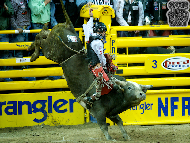 2012 National Finals Rodeo- Bull Riding Stock - Grey Squirrel of New Frontier Rodeo