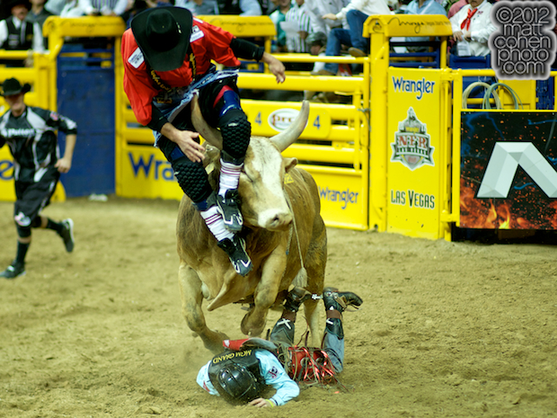 2012 National Finals Rodeo- Bull Riding Stock - Crystal Springs Peach of Sutton Rodeos