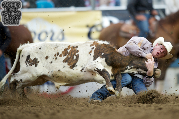 Steer wrestler Hunter Cure of Holliday, TX competes at the Reno Rodeo in Reno, NV.