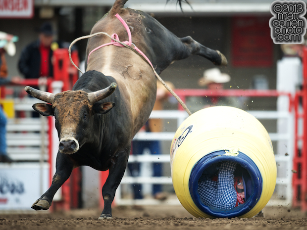 MJ Kat knocks over barrelman Mark Swingler at the California Rodeo in Salinas, CA.