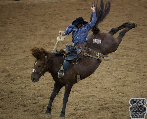 2013 NFR Saddle Bronc Stock - Goin South of Stace Smith Pro Rodeos