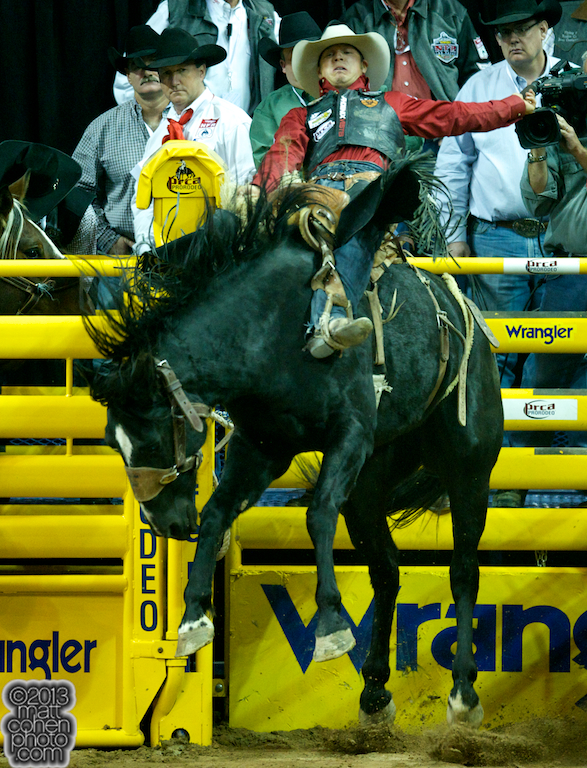 2013 NFR Saddle Bronc Stock - Wild Bill of Frontier Rodeo Co.