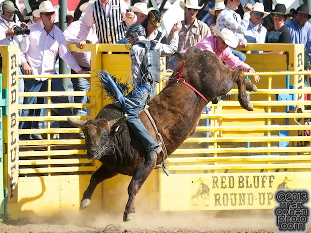 2013 NFR Bull Riding Stock - What a Ball of Growney Bros Rodeo