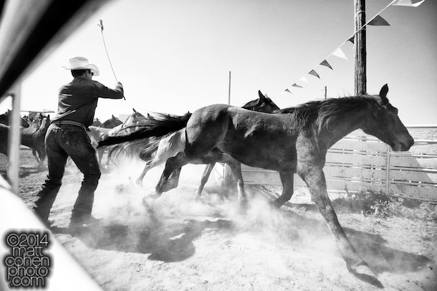 Chuck Morris of Rockin' M Rodeo Co moves some of his broncs at the La Grange Rodeo in La Grange, CA.