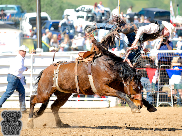 Saddle bronc rider Colin Letson of Laton, CA gets bucked off at the La Grange Rodeo in La Grange, CA.