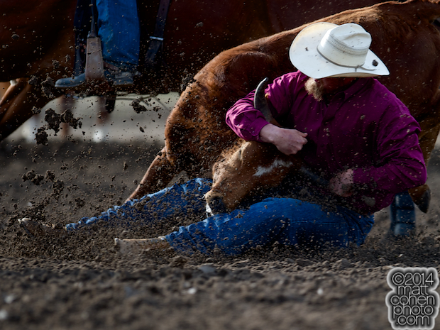 Steer wrestler Stan Branco of Chowchilla, CA competes at the Oakdale Rodeo in Oakdale, CA.