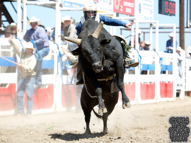 Bull rider Casey White of Weiser, ID rides Ned Kelly at the Oakdale Rodeo in Oakdale, CA.
