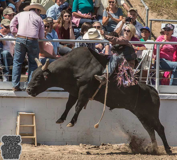 Bull rider Elliott Jacoby of Fredricksburgh, TX rides Ned Kelly at the Oakdale Rodeo in Oakdale, CA. (Picture by Al Golub)