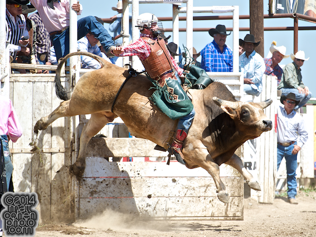 Bull rider Sam Wyatt of Fittstown, OK rides Silver Legacy at the Oakdale Rodeo in Oakdale, CA.