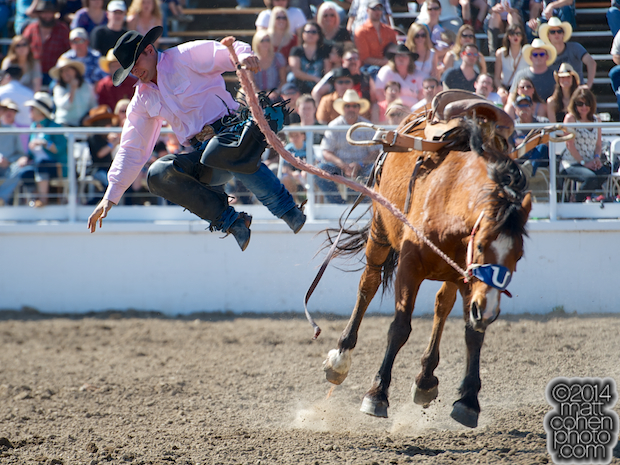 Saddle bronc rider Landon Mecham of Tropic, UT gets bucked off on a re-ride at the Oakdale Rodeo in Oakdale, CA.