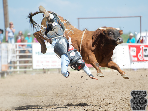 Bull rider Ricky Hallam of Norco, CA gets bucked off Razmatazz at the Oakdale Rodeo in Oakdale, CA.
