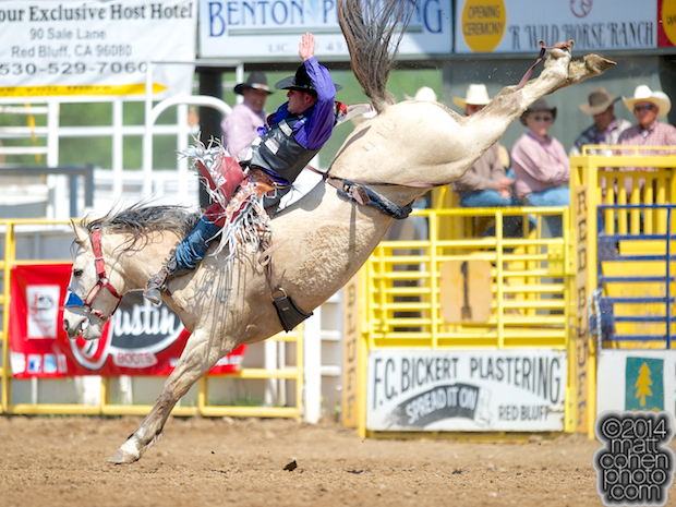 Bareback rider Jessy Davis of Power, MT rides Comanchero at the Red Bluff Round-Up at the Tehama District Fairgrounds in Red Bluff, CA.