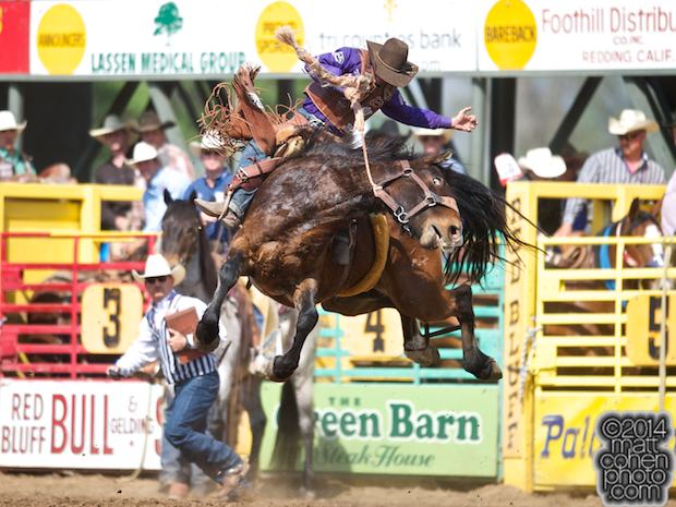 Saddle bronc rider Cody DeMoss of Heflin, LA rides Big City at the Red Bluff Round-Up at the Tehama District Fairgrounds in Red Bluff, CA.
