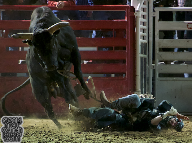 Bull rider Ty Pozzobon of Merrit, BC gets bucked off Maverick at the PBR Touring Pro event at the Clovis Rodeo in Clovis, CA.