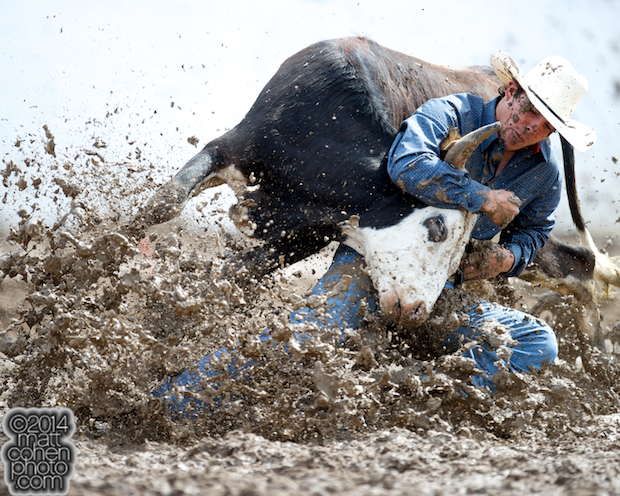 Steer wrestler Dirk Tavenner of Rigby, ID competes competes at the Clovis Rodeo in Clovis, CA.