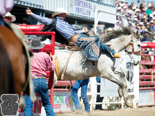 Saddle bronc rider Tyler Corrington of Hastings, MN rides Numero Uno at the Clovis Rodeo in Clovis, CA.