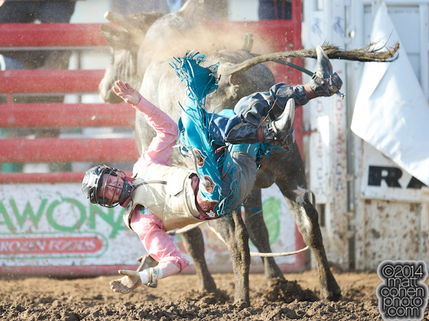 Bull rider Brett Stall of Detroit Lakes, MN gets bucked off Blue Blooded at the Clovis Rodeo in Clovis, CA.