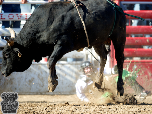 Bull rider Jordan Spears of Redding, CA gets bucked off Victory Dance at the Clovis Rodeo in Clovis, CA.