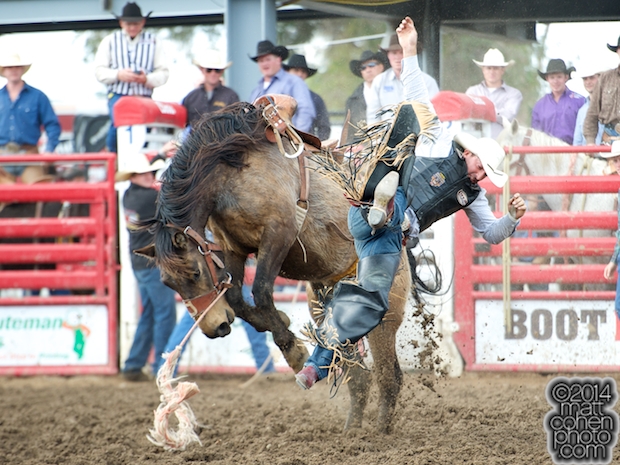 Saddle bronc rider Nick LaDuke of Livermore, CA gets bucked off 824 at the Clovis Rodeo in Clovis, CA.