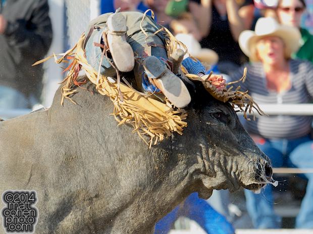 Bull rider Scottie Knapp of Albuquerque, NM gets bucked off Canadian Tuxedo at the Clovis Rodeo in Clovis, CA.