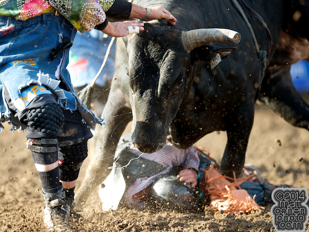 Bull rider Chris Roundy of Spanish Fork, UT gets bucked off Dirty Macy at the Clovis Rodeo in Clovis, CA.