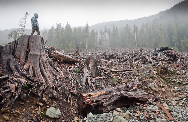 Clearcut felling of old growth forest, Bugaboo Creek, British Colombia. Photo by  TJ Watt .