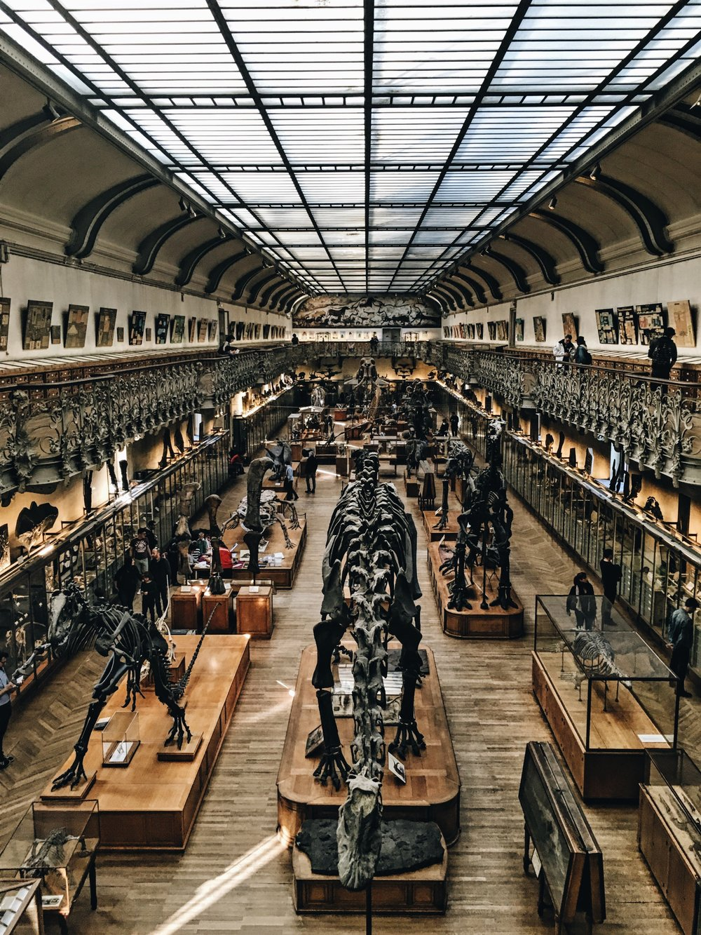 Very quiet dinosaurs, Paris France. Pic by  Anthony Delanoix.