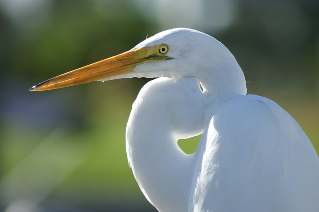 Evdokia saw a white bird in the house. Photo courtesy  Linda29 .