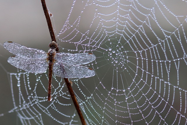 From the shape it could be a spider web, because it goes in all directions. Pic by  Adine Voicu .