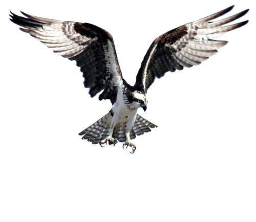 Paul Sharman Outdoors