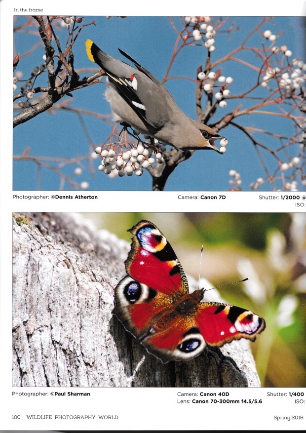 Wildlife Photography World - Spring 2016 Issue 1