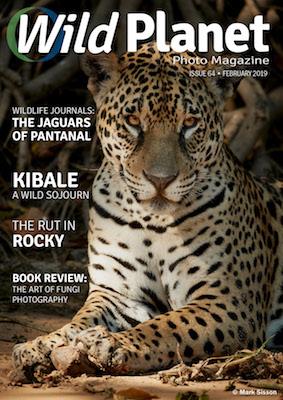 Wild Planet Feb Cover.jpg