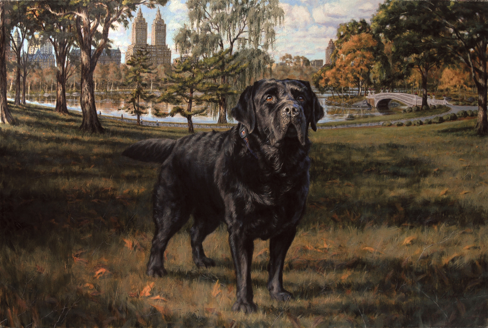 "Black Labrador Retriever ""Scipio"""