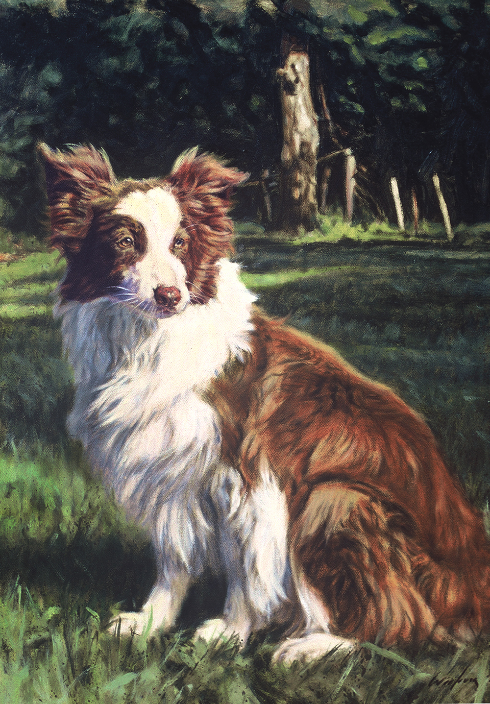 "Border Collie ""Poe"""