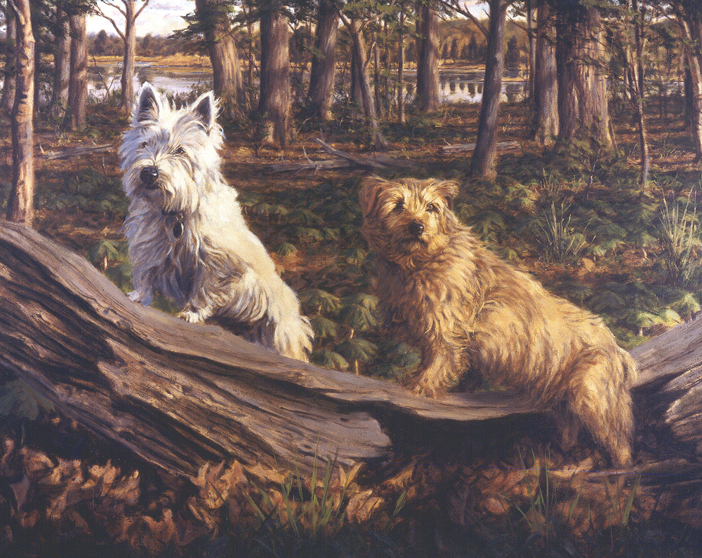 West Highland and Norfolk Terrier