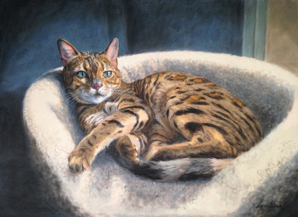 Sophie | Bengal Cat