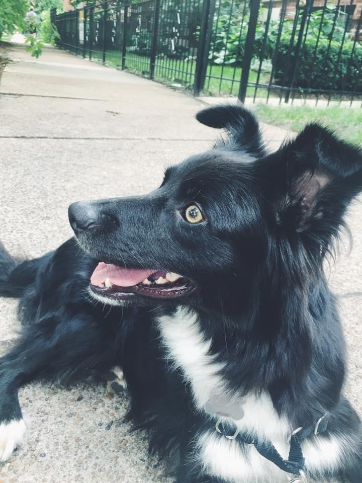 Meet Lola.
