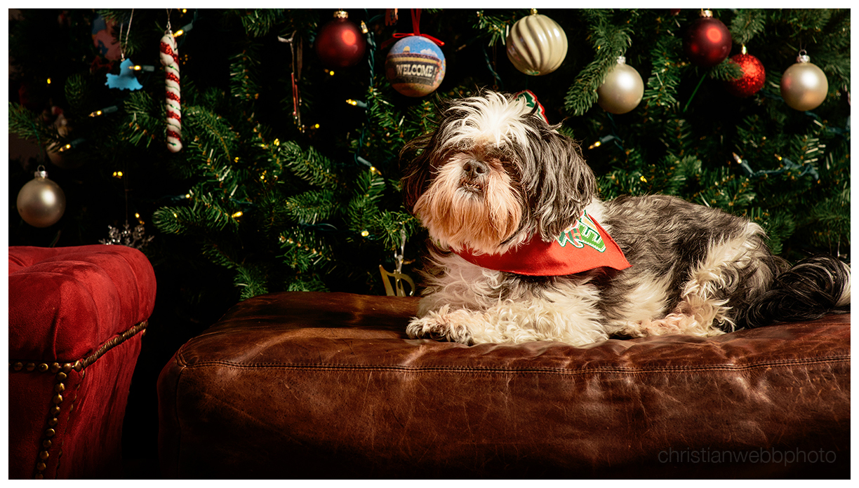 Holiday portrait photography - Christian Webb Photography